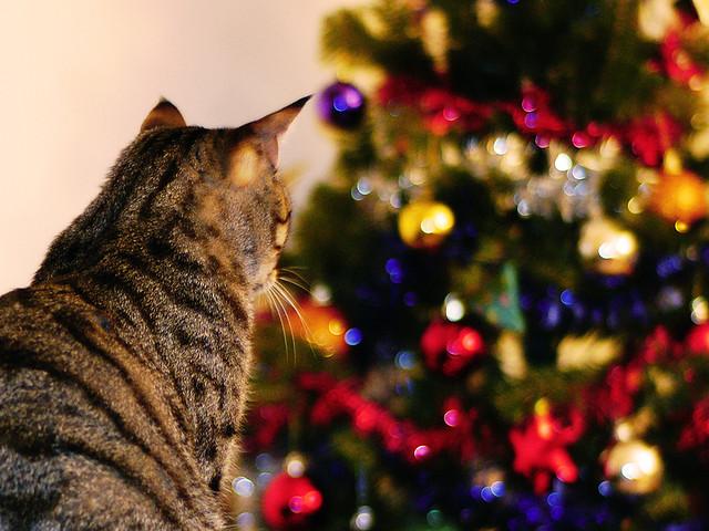 gatto-fissa-albero